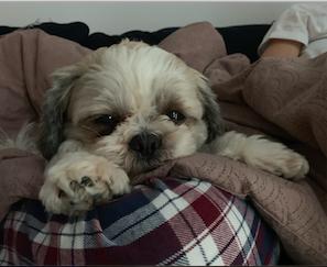 Mig og min hund.