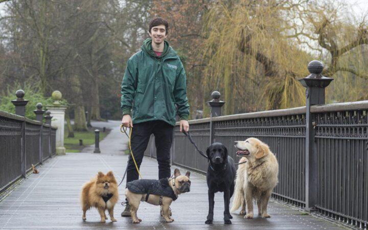 green-dog-walking