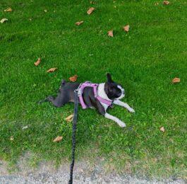 MIGsagdehunden
