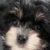 Profilbillede af hundeelskerne